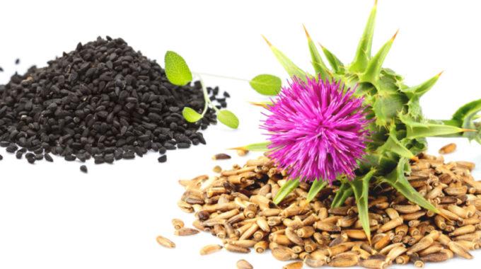 Semená A Kvet Pestreca Mariánskeho A Egyptský čierny Kmín